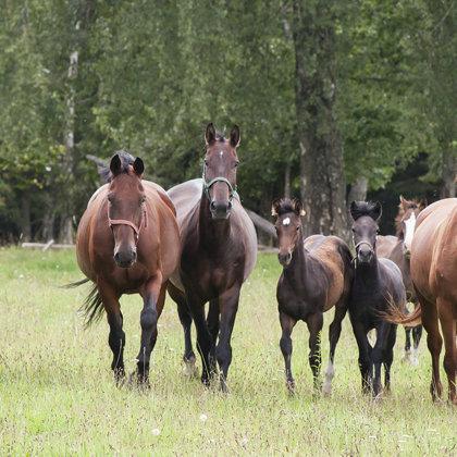 """Horses in farm """"Zageri"""""""